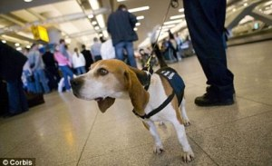 dog at heathrow